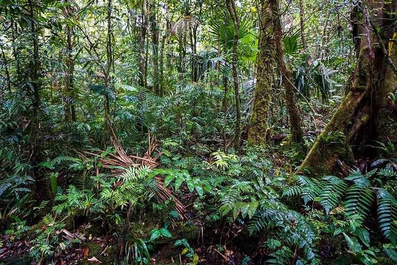 Fortuna, situado en el oeste de Panamá, es el bosque más nublado de Centroamérica y almacena tres veces más carbono de lo pensado