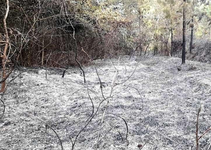 El fuego consumió varias hectáreas de bosque específicamente en el Sector de La Peña, distrito de Las Minas.