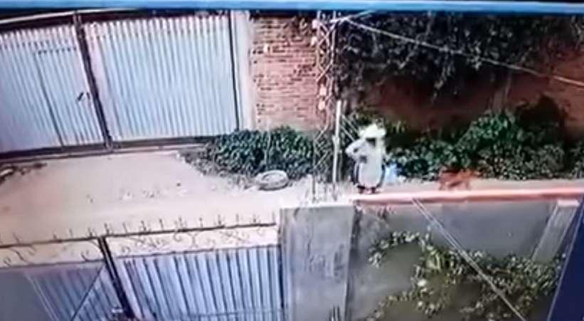 La grabación muestra que un perro la ataca y la hace caer al suelo e inmediatamente más canes se acercan a la señora para morderla.