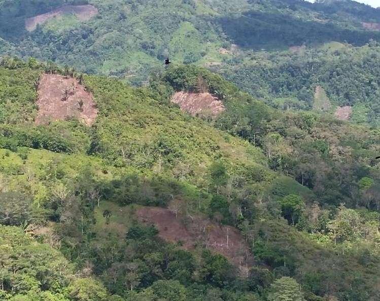 Los bosques y rastrojos talados se ubican en las comunidades de Cirí Grande, Peñas Blancas y Bajo Bonito en la provincia de Panamá Oeste.