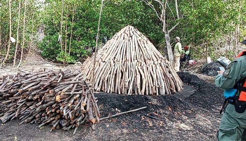 La extracción de mangle para la elaboración del carbón, ha sido por generaciones la principal fuente de empleo para las familias de Bejuco.