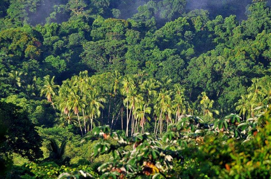 Vista del Parque Nacional Coiba, un conjunto de islas de origen volcánico ubicadas en el Pacífico panameño. EFE