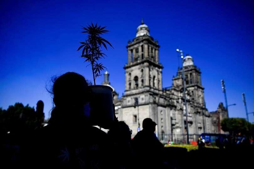 ersonas muestran una planta de marihuana el 09 de Marzo de 2021, en el Zócalo de la Ciudad de México (México). EFE